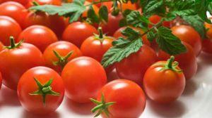 圣女果和番茄的区别