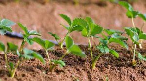种子发芽的三个条件