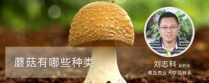 蘑菇有哪些种类