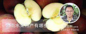 云南水果特产有哪些