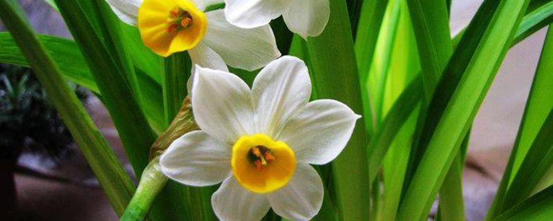 室内不适合养什么花或植物