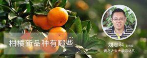 柑橘新品种有哪些