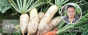 种萝卜的方法和步骤