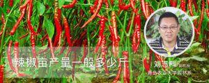 辣椒亩产量一般多少斤