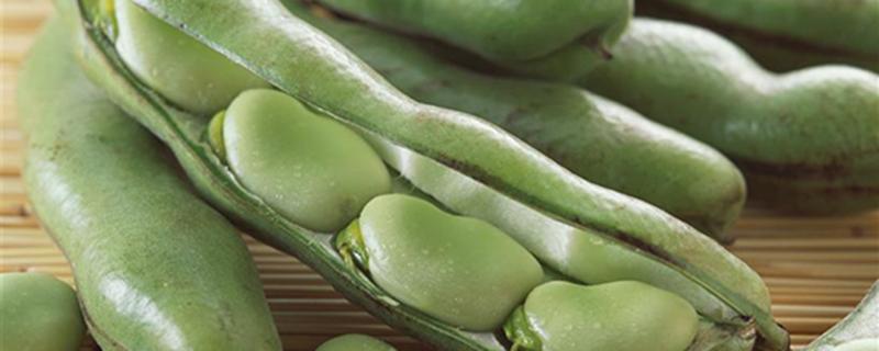 阳台怎么盆栽蚕豆?
