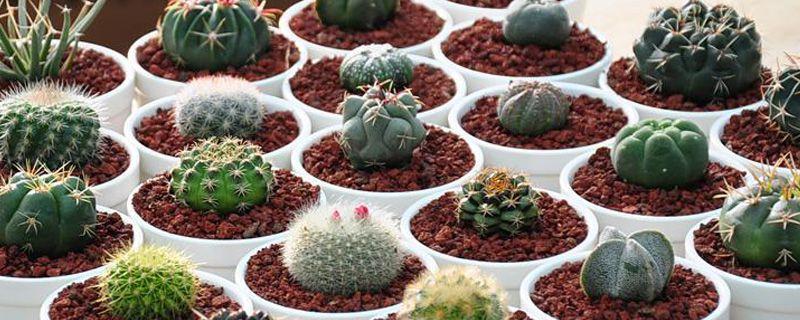 适合水养的室内植物花