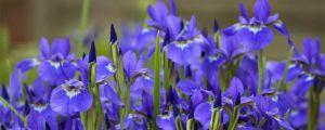 春天有哪些花开