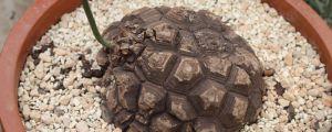 龟甲龙的养护方法