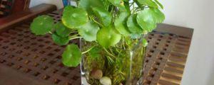 水培怎么转土培