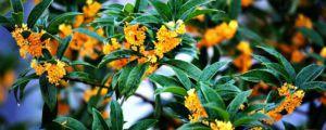 秋天开花的植物有哪些