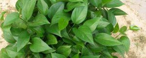 最适合在办公室养的10种绿植