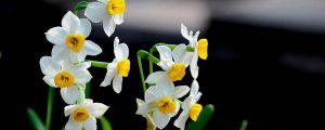 哪些花有毒