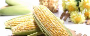 水果玉米、甜玉米是不是转基因