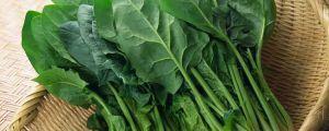 菠菜怎么种植发芽快