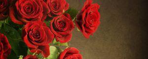 送什么花给女朋友最好