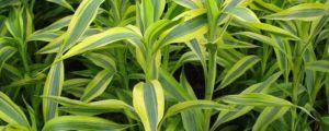 10种超简单水培植物,养花杀手的救星
