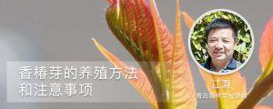 香椿芽的养殖方法和注意事项