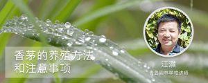 香茅的养殖方法和注意事项