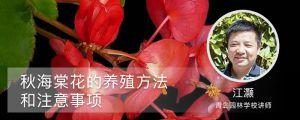 秋海棠花的室内养殖方法和注意事项