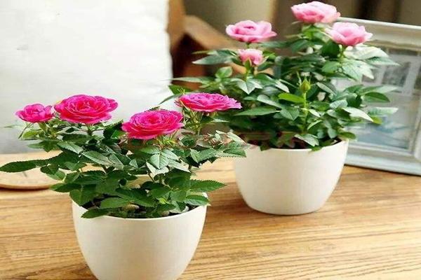 """在家自己制作3种""""开花液"""",半月用上点,花苞枝条都蹿!"""