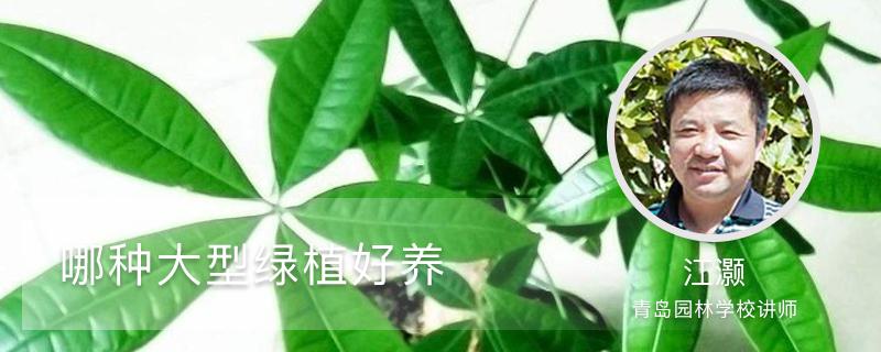 哪种大型绿植好养(室内和室外)