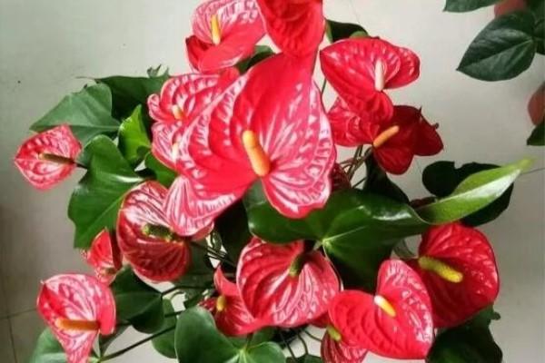 开工大吉!这6种花,让你新年开门红,日子顺风顺水!