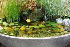 废桶旧盆里添水种花,10分钟成水景,细水长流富贵一生!