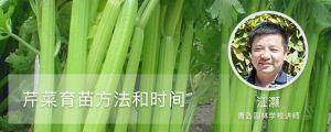 芹菜育苗方法和时间