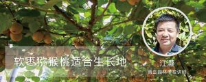 软枣猕猴桃适合生长地