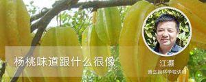 杨桃味道跟什么很像