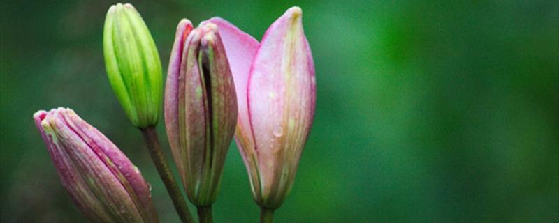 水仙花和百合花的区别