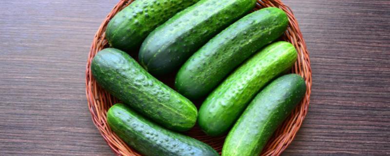 黄瓜和青瓜的区别,黄瓜图片