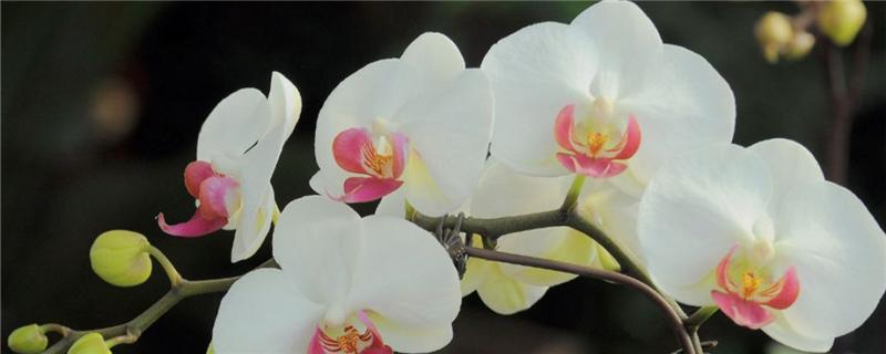 蝴蝶兰常见病以及防治,常见病和用药