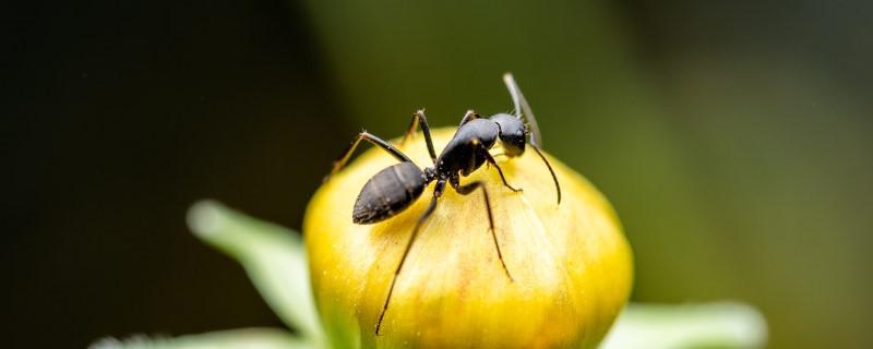 永久去除蚂蚁的小妙招,蚂蚁怕什么