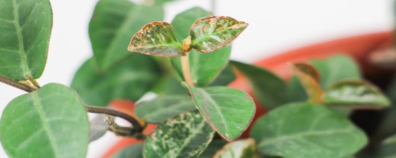 上海本土植物有哪些