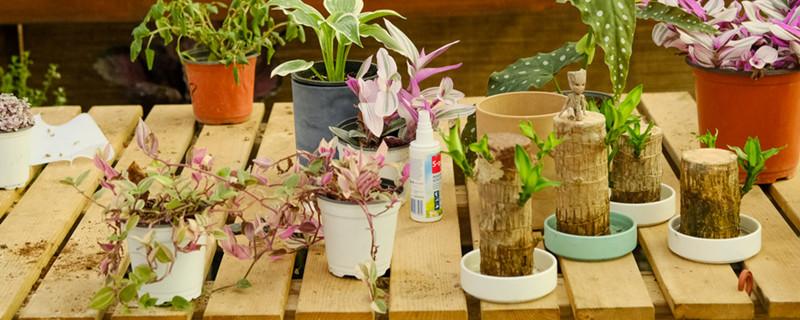 植物补光一般用什么灯