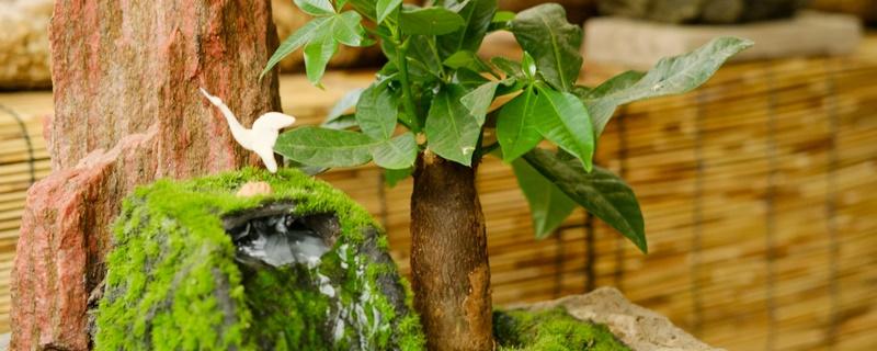 旺宅的室内盆栽有什么