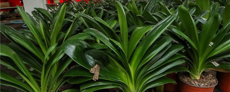 绿植养护知识和方法