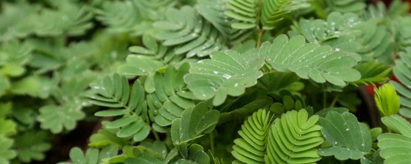 哪些植物有特异功能