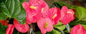 十二种招财花