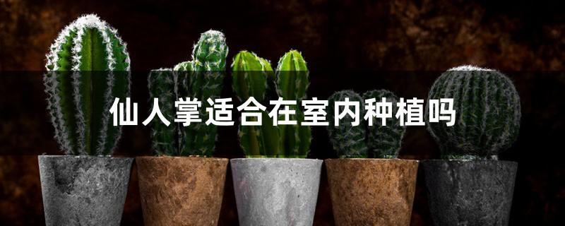 仙人掌适合在室内种植吗
