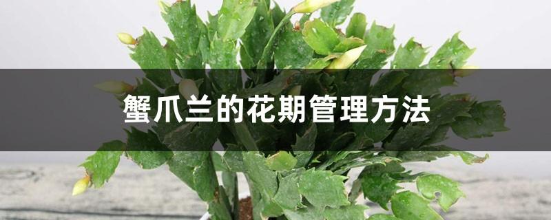 蟹爪兰的花期管理方法