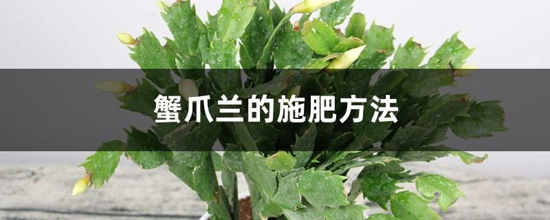 蟹爪兰的施肥方法