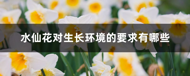 水仙花对生长环境的要求有哪些
