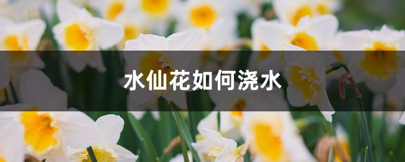 水仙花如何浇水