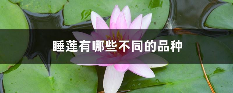 睡莲有哪些不同的品种