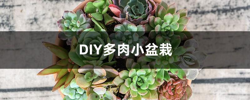 DIY多肉小盆栽