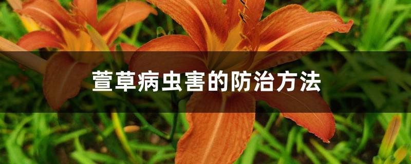 萱草病虫害的防治方法