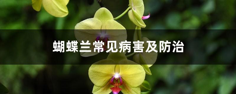 蝴蝶兰常见病害及防治