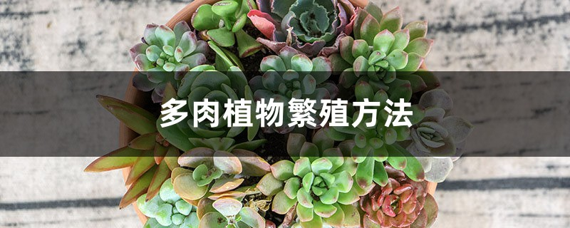 多肉植物繁殖方法